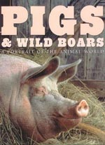 pigs and wildboars
