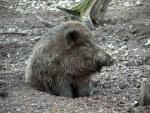 wildschweine-eveline.jpg