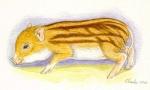 minischwein-aquarell.jpg