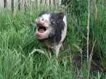 caspera-pigs5.jpg