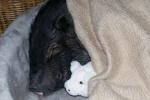 minischwein-kuschelrunde02.jpg