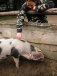 schwein-cloppenburg.jpg