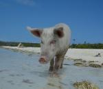 strandschwein.jpg
