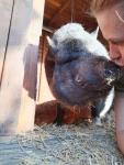 schweinchen-kuss.jpg