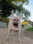 hausschwein-emma.jpg