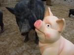 Schweinefigur2_jpg.jpg