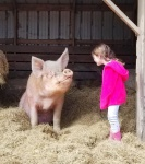 The Pig Preserve - A special place for pigs